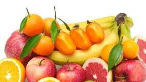 Fruit de collection Image libre de droits