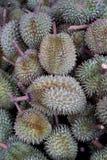 Fruit de durian ; le roi du fruit Photos libres de droits