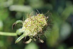 Fruit de fleur Photographie stock libre de droits