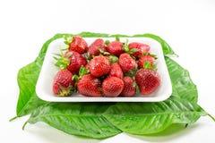 Fruit de fraise Image stock