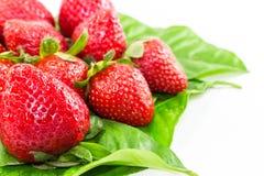 Fruit de fraise Photos stock