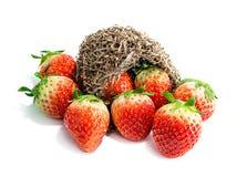 Fruit de fraises Images stock