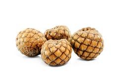 Fruit de graine d'isolement Photo libre de droits