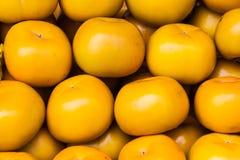 Fruit de kaki Image stock