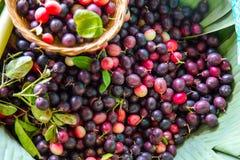 Fruit de Karanda, carandas L de Carissa photographie stock libre de droits