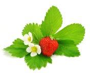 Fruit de la fraise rouge d'isolement images stock