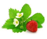 Fruit de la fraise rouge d'isolement photo libre de droits