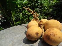 Fruit de Lanzones Image stock