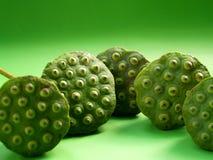Fruit de lotus images libres de droits