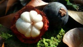 Fruit de mangoustan photographie stock libre de droits