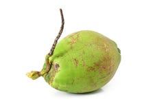 Fruit de noix de coco Photographie stock libre de droits