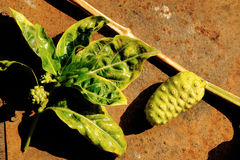 Fruit de Noni Photographie stock libre de droits