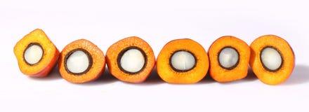 Fruit de palmier à huile photos stock