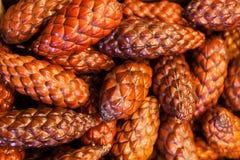 Fruit de palmier dattier Images libres de droits