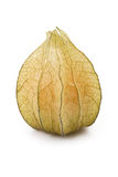 Fruit de Physalis Photo stock
