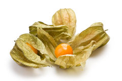 Fruit de Physalis Photographie stock