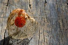 Fruit de Physalis Photo stock