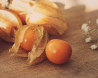 Fruit de Physalis Photos libres de droits