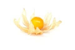 Fruit de Physalis (coqueret comestible) Image libre de droits