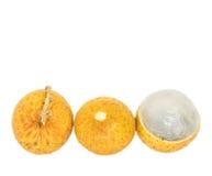 Fruit X de plot réflectorisé Photographie stock libre de droits