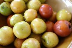 Fruit de pomme de singe Photo libre de droits