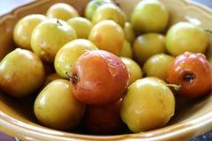 Fruit de pomme de singe Images stock