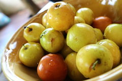 Fruit de pomme de singe Photo stock