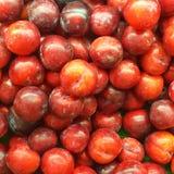 Fruit de prune Photos libres de droits