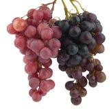 Fruit de raisin Photographie stock libre de droits