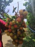Fruit de ramboutan image libre de droits