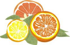 Fruit de Rcitrus - orange, pamplemousse et citron illustration de vecteur