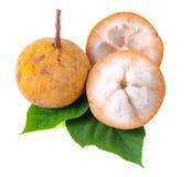 Fruit de Santol d'isolement sur le fond blanc Photographie stock