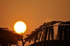 Fruit de Sun dans la forêt Image libre de droits