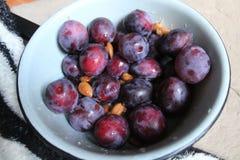 Fruit on dessert. Appetizing ripe sweet blue plums fruit for dessert in metal bowl royalty free stock photo