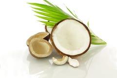Fruit droge kokosnoot Stock Foto's