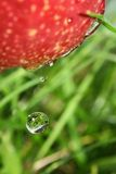 Fruit drop. Royalty Free Stock Photography