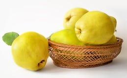 Fruit du sud de coing Photographie stock libre de droits