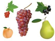 Fruit en besseninzameling. Royalty-vrije Stock Fotografie
