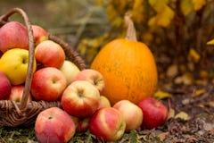 Fruit en groente in tuin Royalty-vrije Stock Fotografie