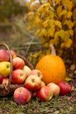 Fruit en groente in tuin Stock Foto