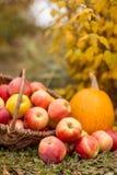 Fruit en groente in tuin Royalty-vrije Stock Afbeeldingen