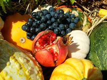 Fruit en groenten - ingrediënten Royalty-vrije Stock Foto