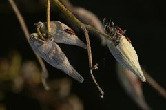 Fruit et insectes secs Photos libres de droits