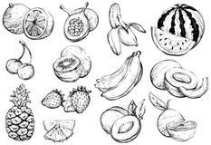 Fruit exotique sain tiré par la main d'été, croquis Images libres de droits