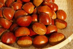 Fruit of fall, chestnut. Fresh chestnut in bamboo hijacker royalty free stock images