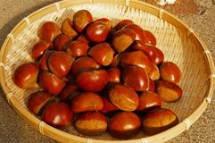 Fruit of fall, chestnut. Fresh chestnut in bamboo hijacker royalty free stock image