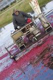 Fruit Farmer Prepares Cranberry Bog for Harvest Royalty Free Stock Photos