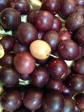 Fruit. Fetid passionflower, Scarlet fruit, passionflower, Stinking passionflower Stock Photography