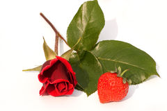 Fruit & Flowers, single red rose & a strawberry Royalty Free Stock Photography