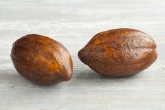 Fruit frais de cacao Photos libres de droits